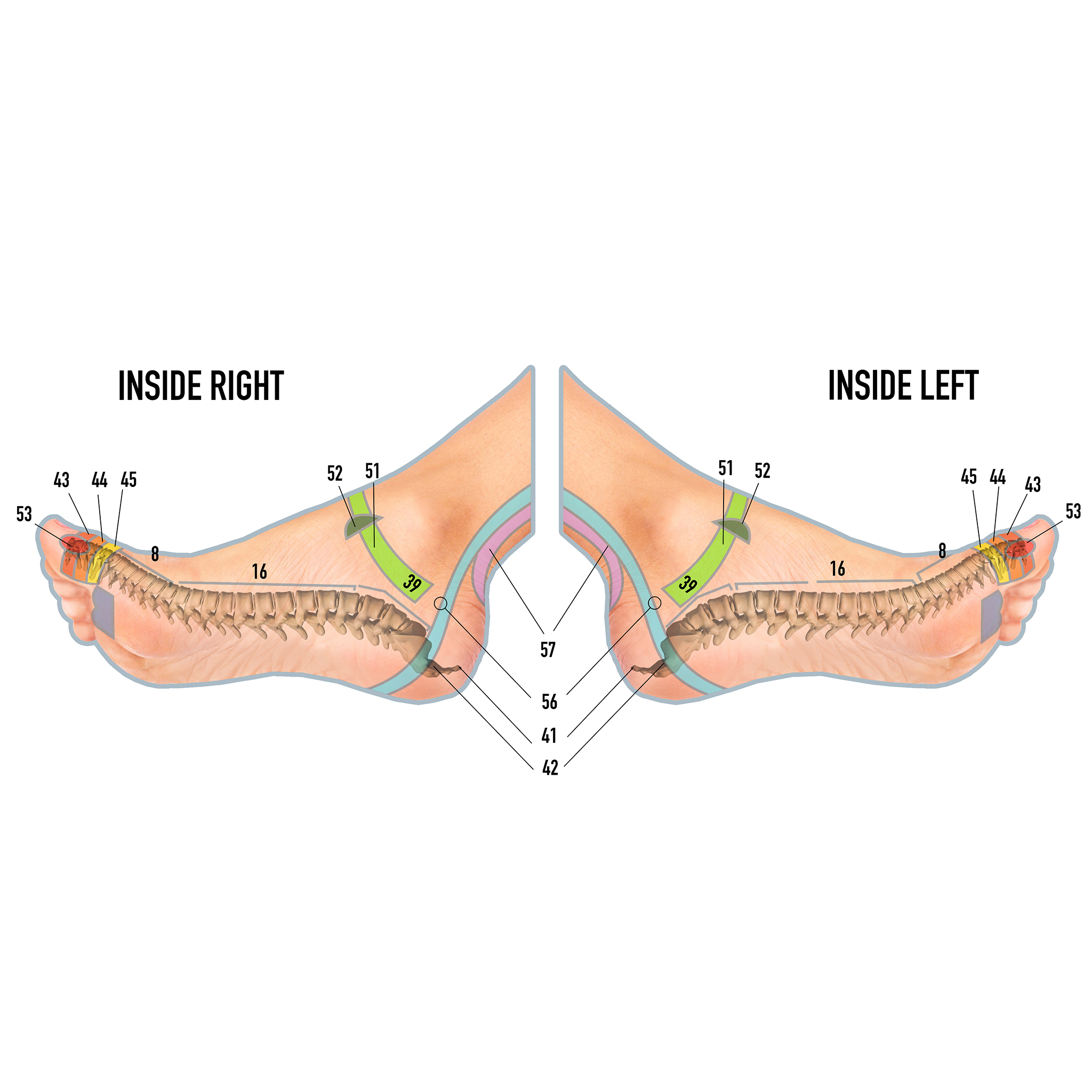 connection between the spine and your feet